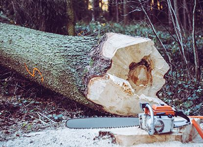 Chainsaw by Log